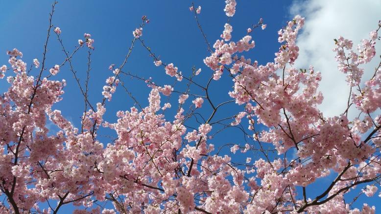 flowers-2708955_1920