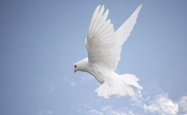 dove-blue-sky-650x400